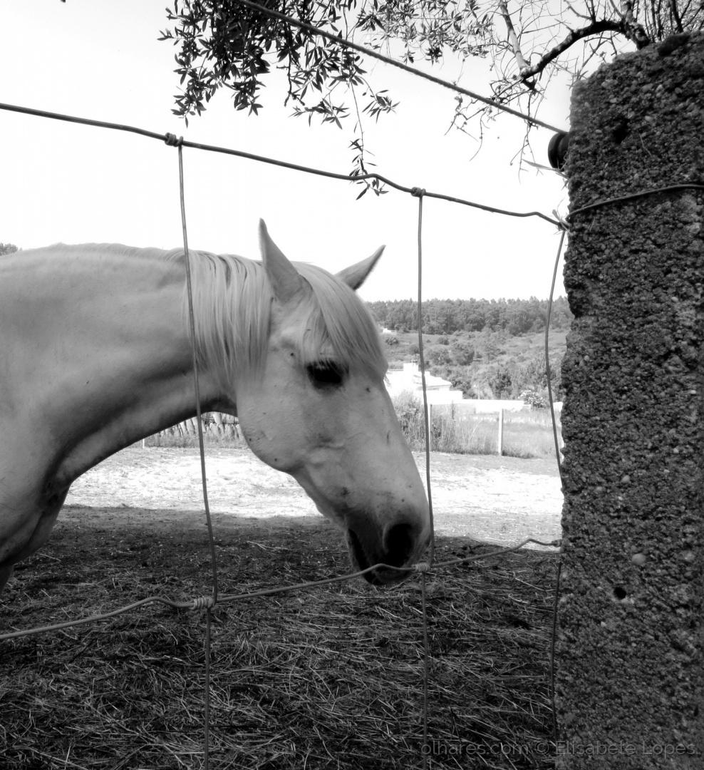 Animais/Perfil de um cavalo...