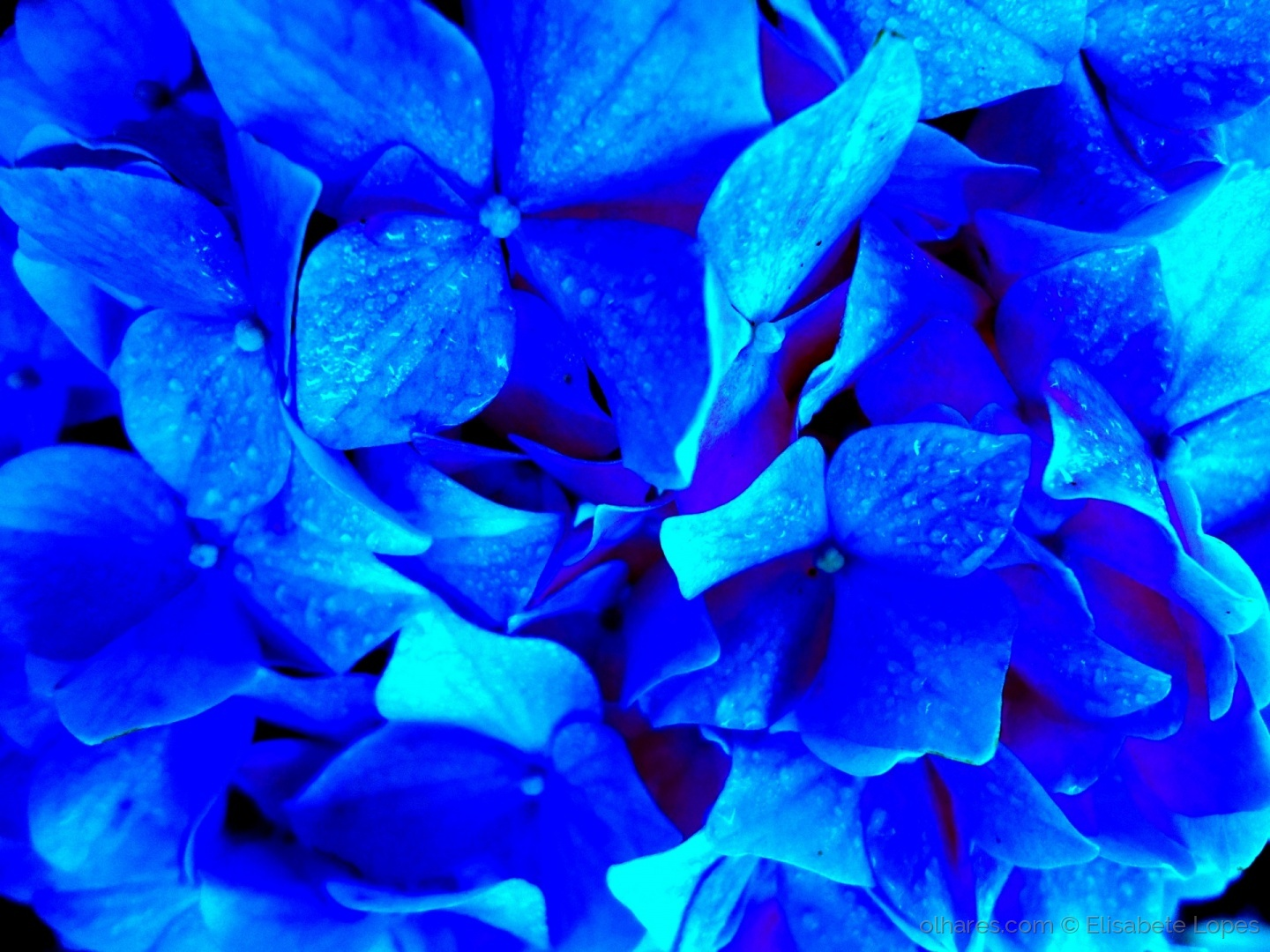 Macro/Only blue...
