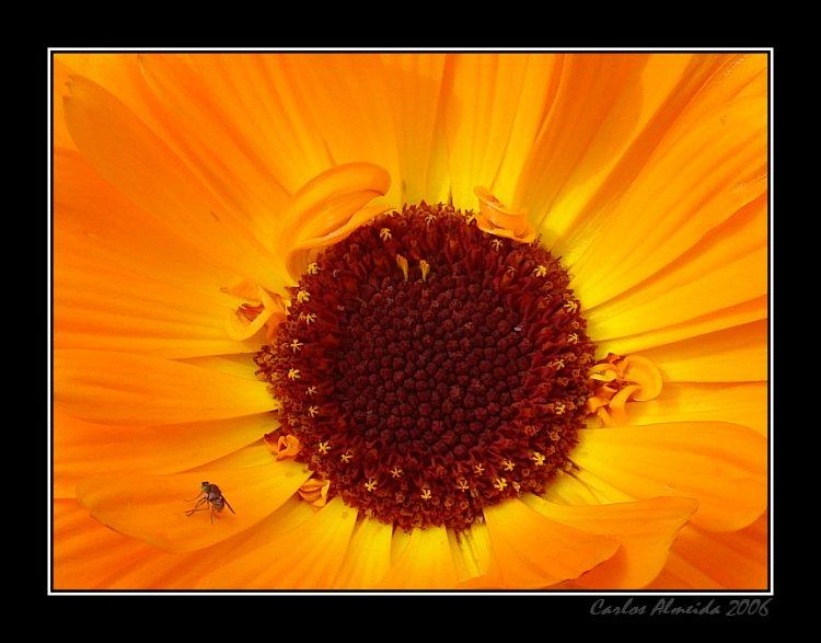 Macro/...se Deus é as flores...