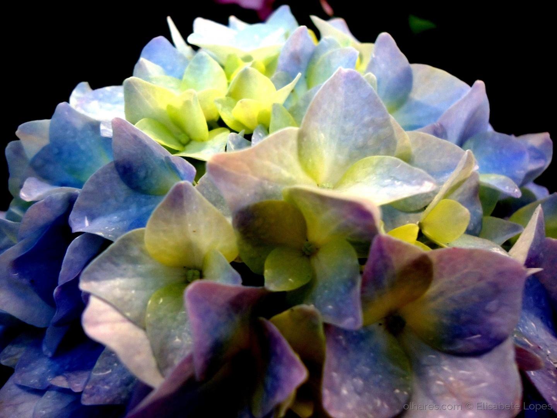 Paisagem Natural/Bouquet