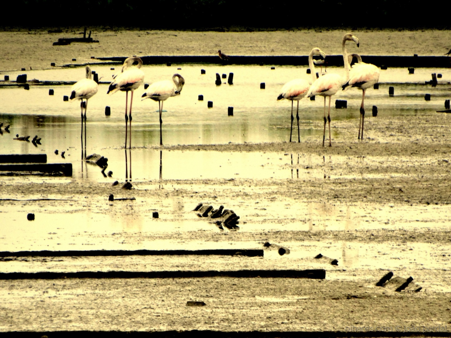 Paisagem Natural/Flamingos ao Pôr do Sol