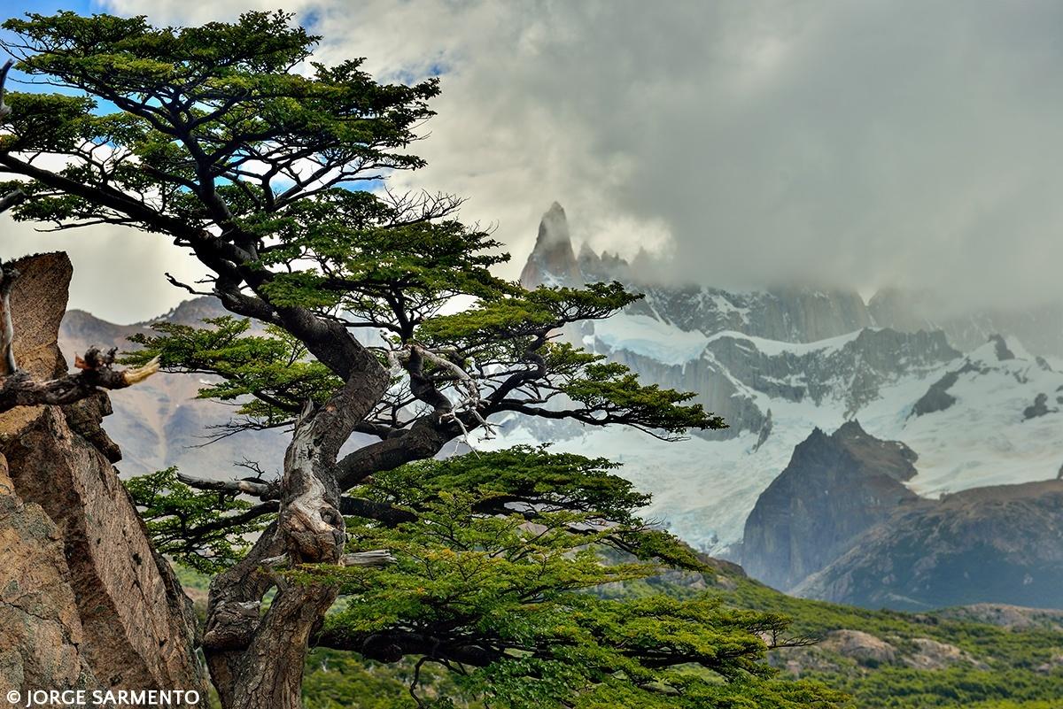 Paisagem Natural/windy tree