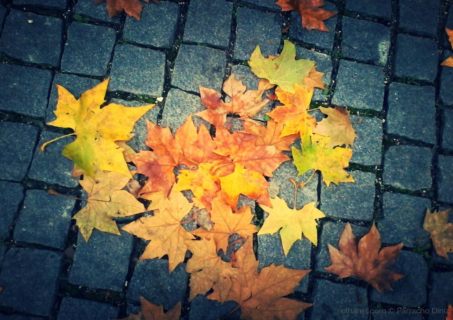 Paisagem Urbana/Outono