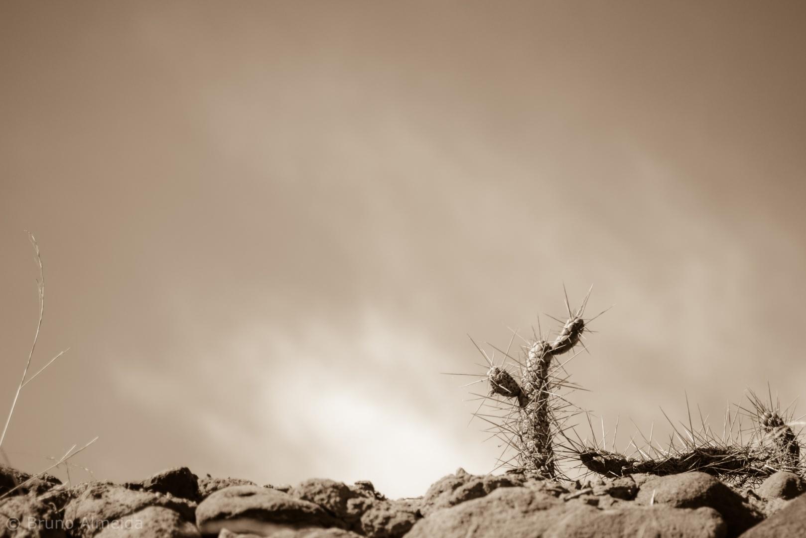 Paisagem Natural/Cactus