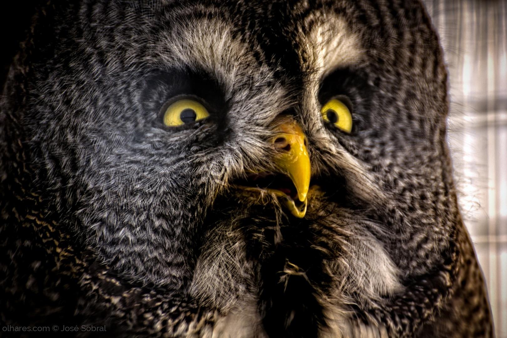 Animais/Inteligência, sabedoria e conhecimento (ler)