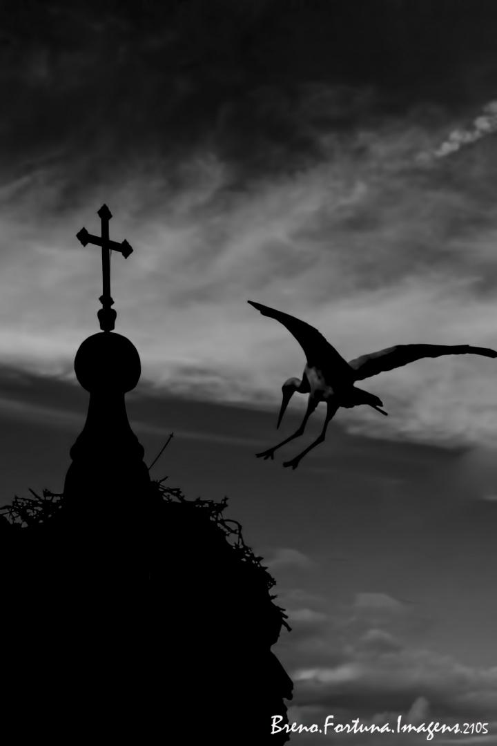 Animais/Selvagens Urbanos 4 - A Religiosa