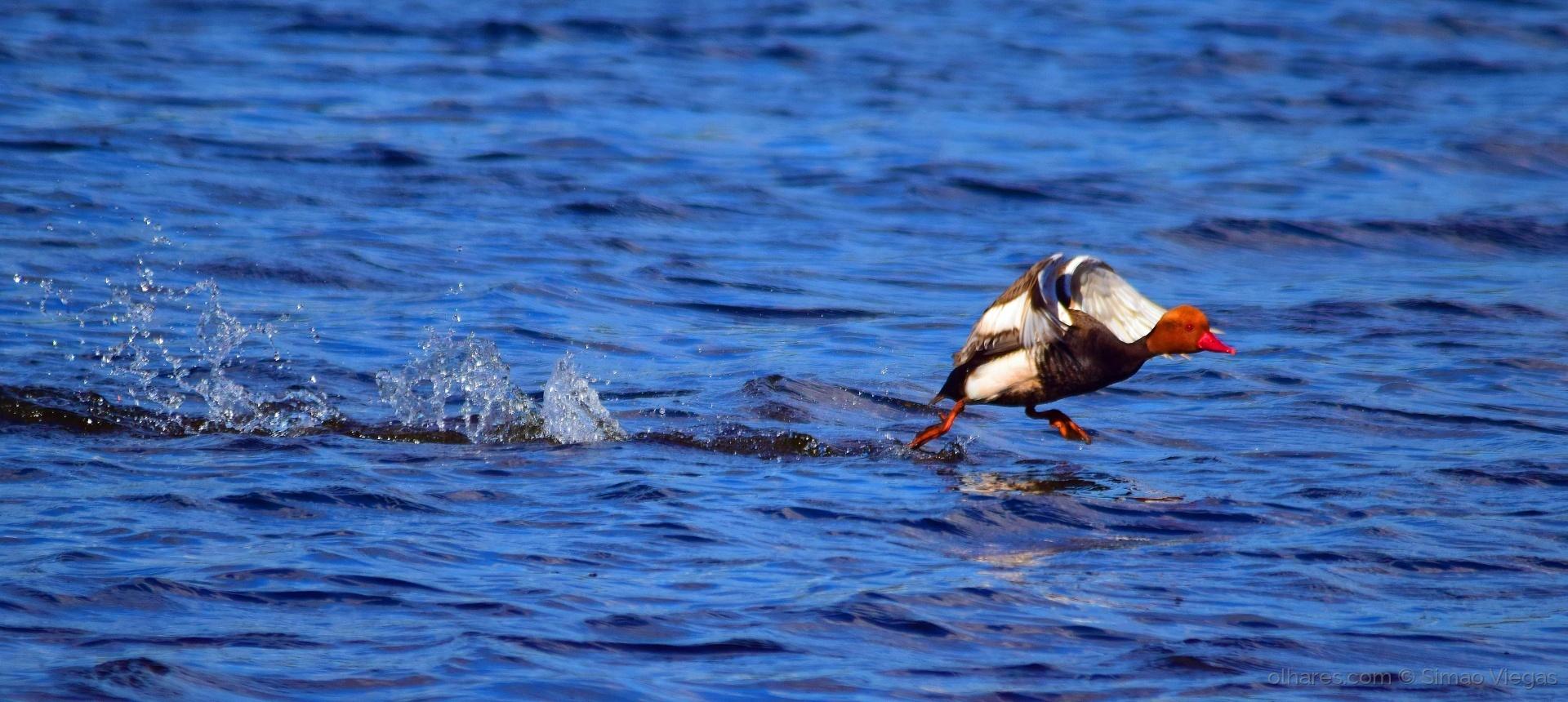 Animais/Sobre a água
