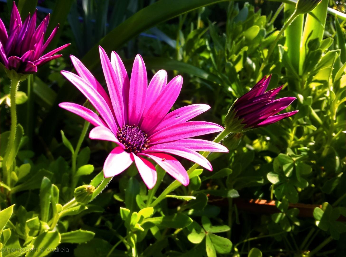 Paisagem Natural/Flower