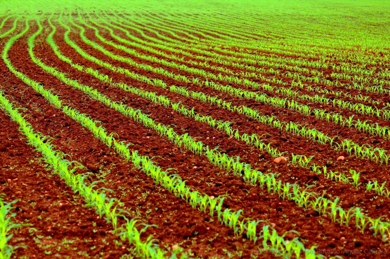 Outros/Verdes (+1) são os campos