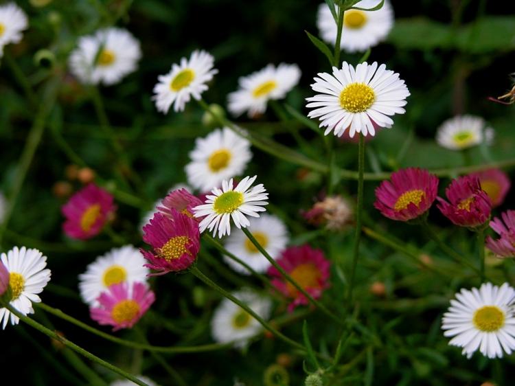 Um Mar De Pequenas Flores Foto De Francisco M S Botelho