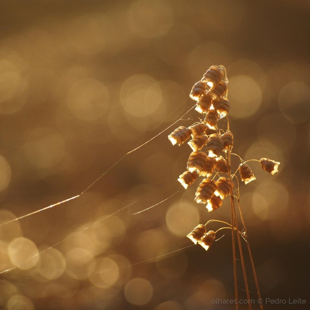 Paisagem Natural/Golden bells