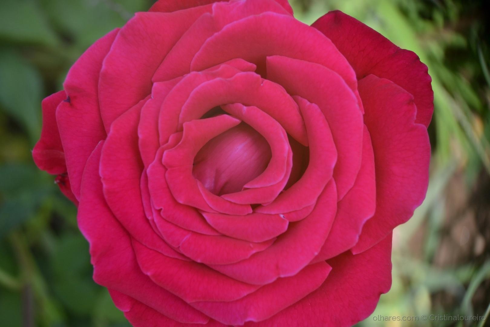 Outros/A simplicidade de uma flor...