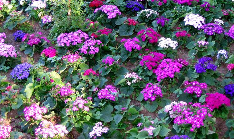 Flores de jardim foto de ant nio ferreira olhares - Plantas de exterior baratas ...