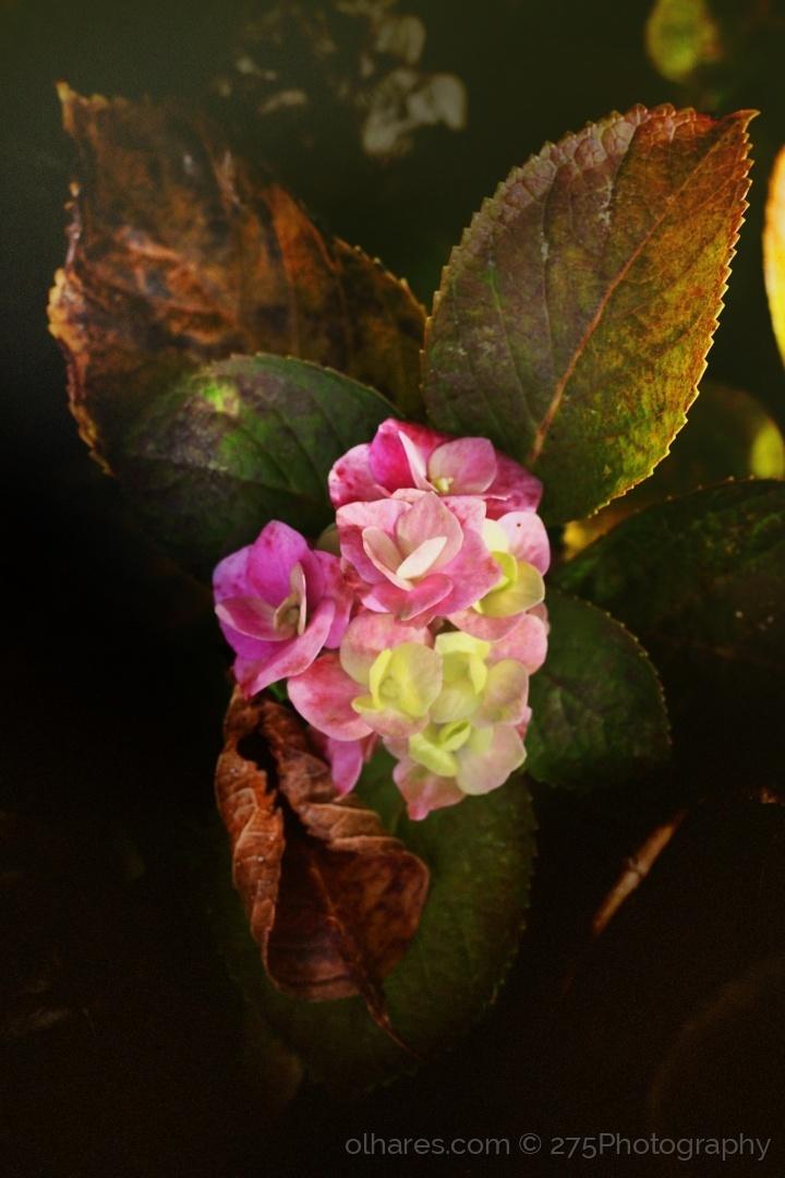 Macro/Spring in Autumn