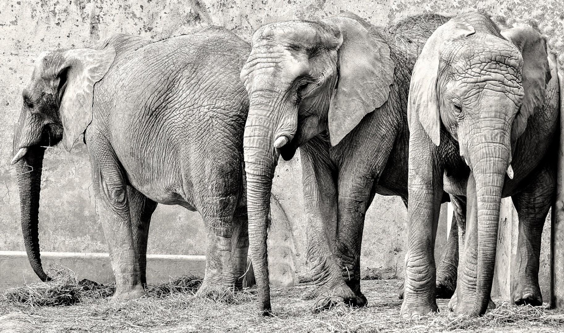 Outros/Elefantes