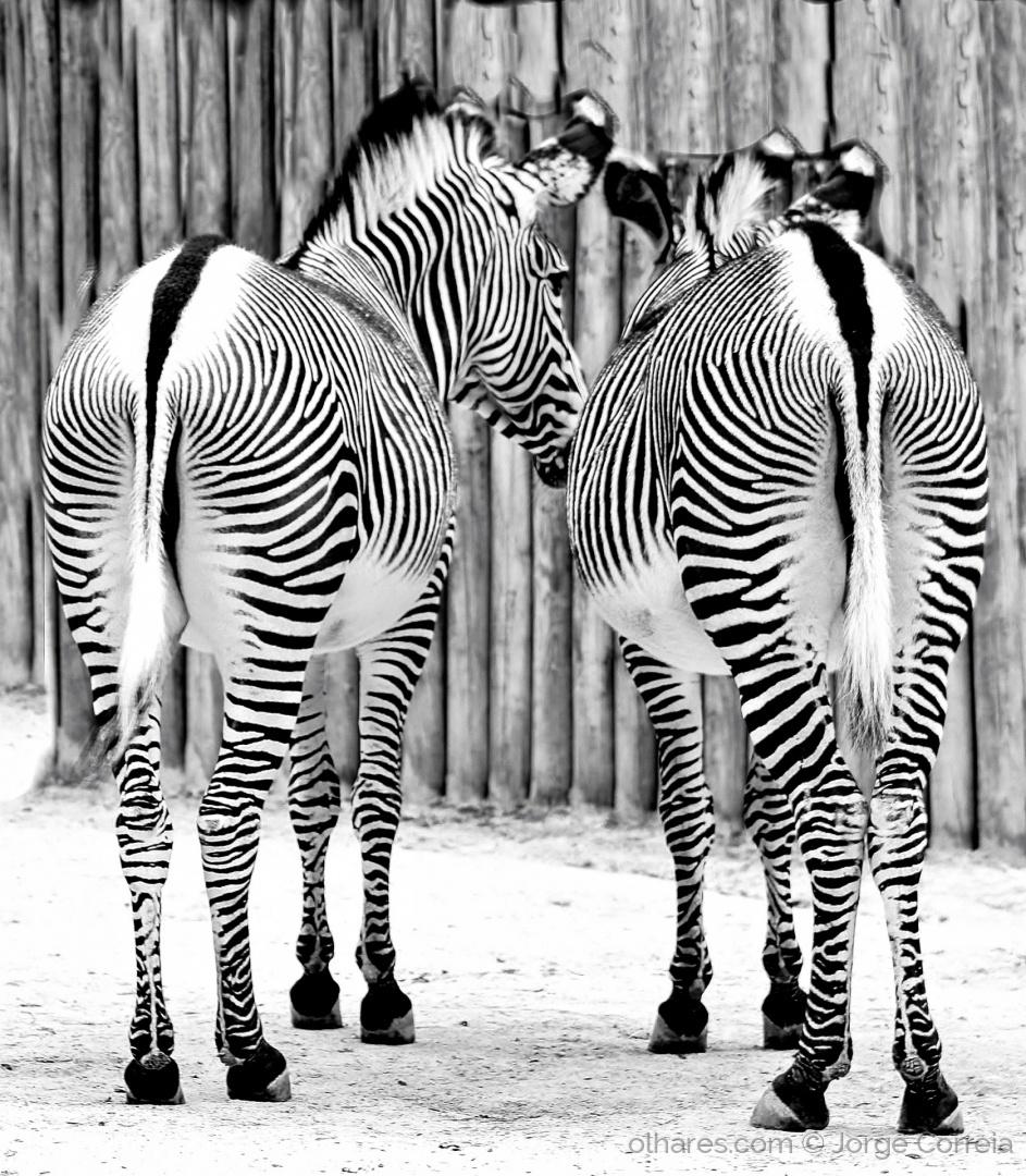 Outros/Zebras