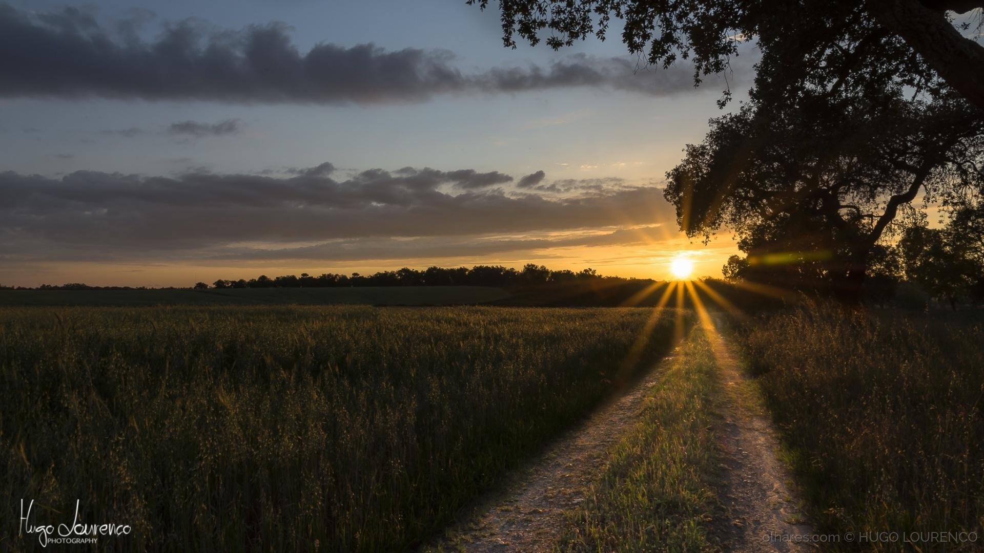 Paisagem Natural/A Iluminar o Meu Caminho