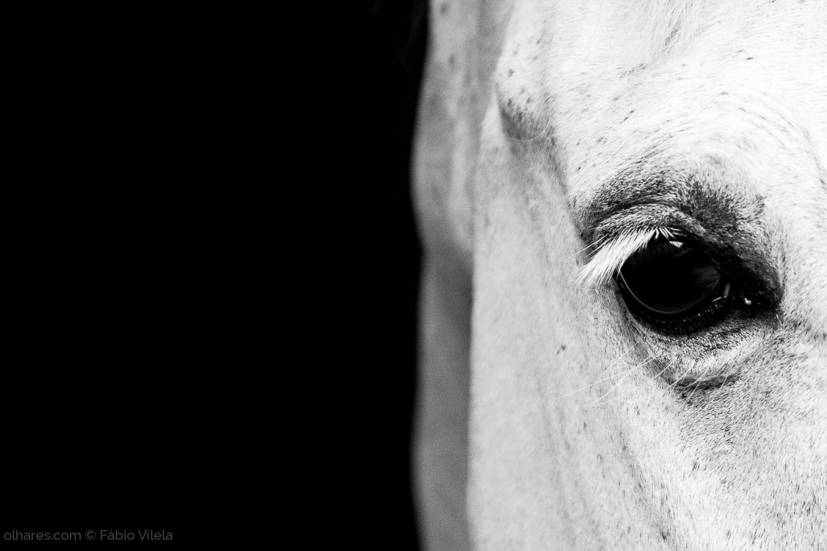 Animais/Equus ferus