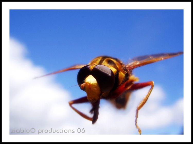 Animais/Olá voador