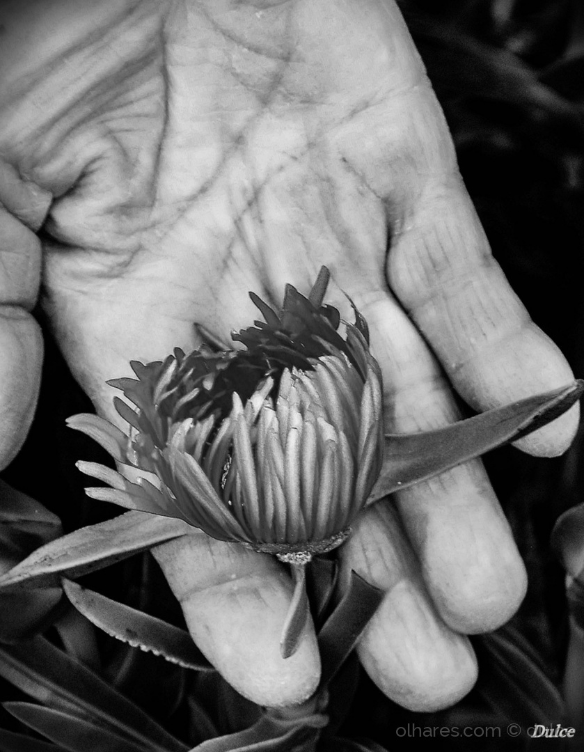 Outros/Uma flor...