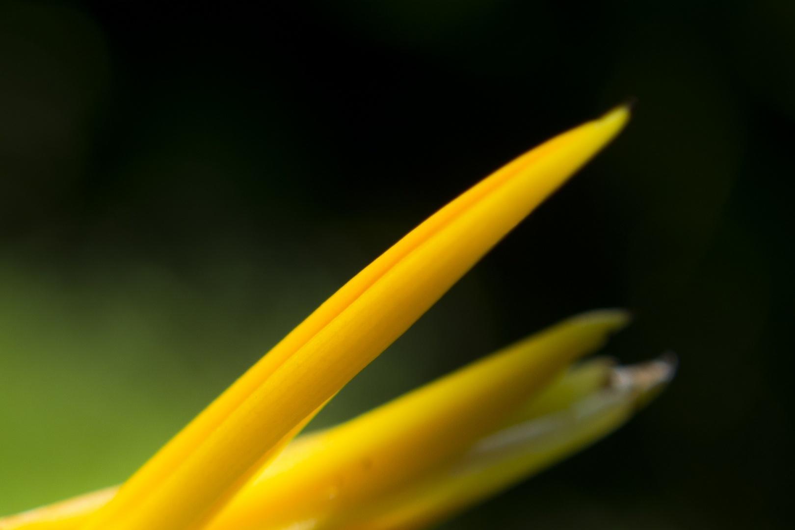 Paisagem Natural/Strelitzia Nicolai