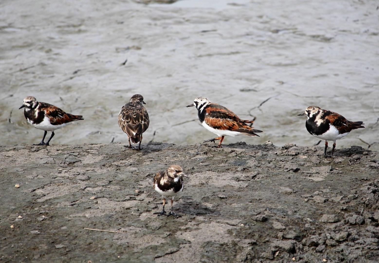 Animais/Rolas do mar em reunião