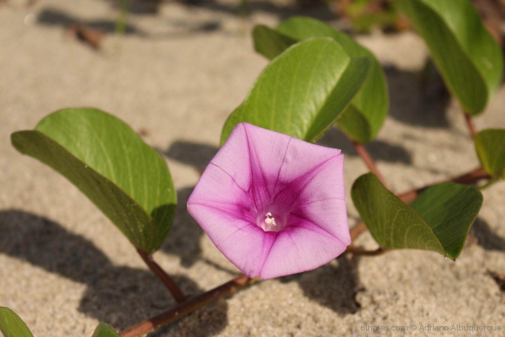 Paisagem Natural/A bela da praia