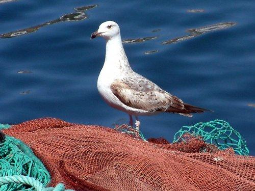 Animais/pesca na rede