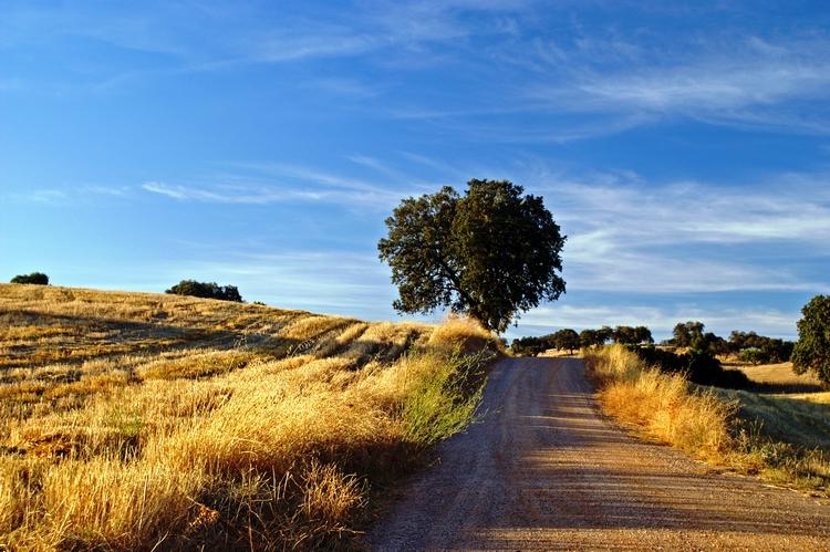 Paisagem Natural/Caminhadas