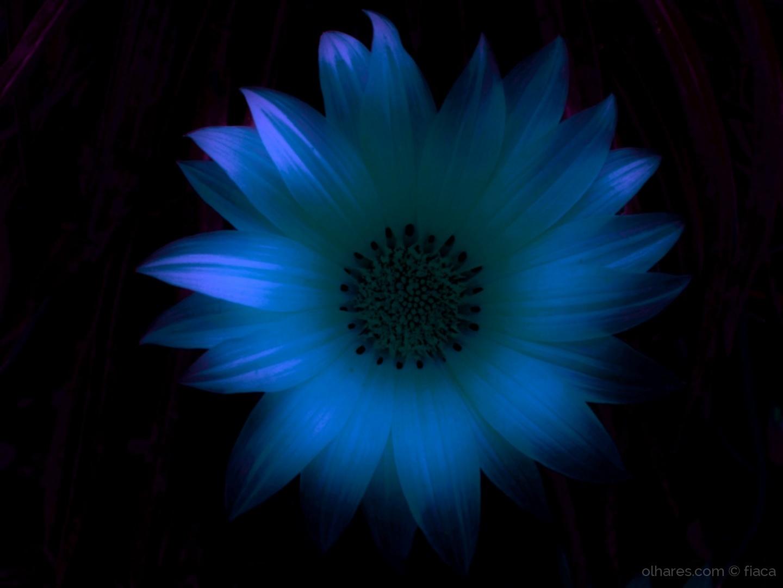 Macro/simply blue