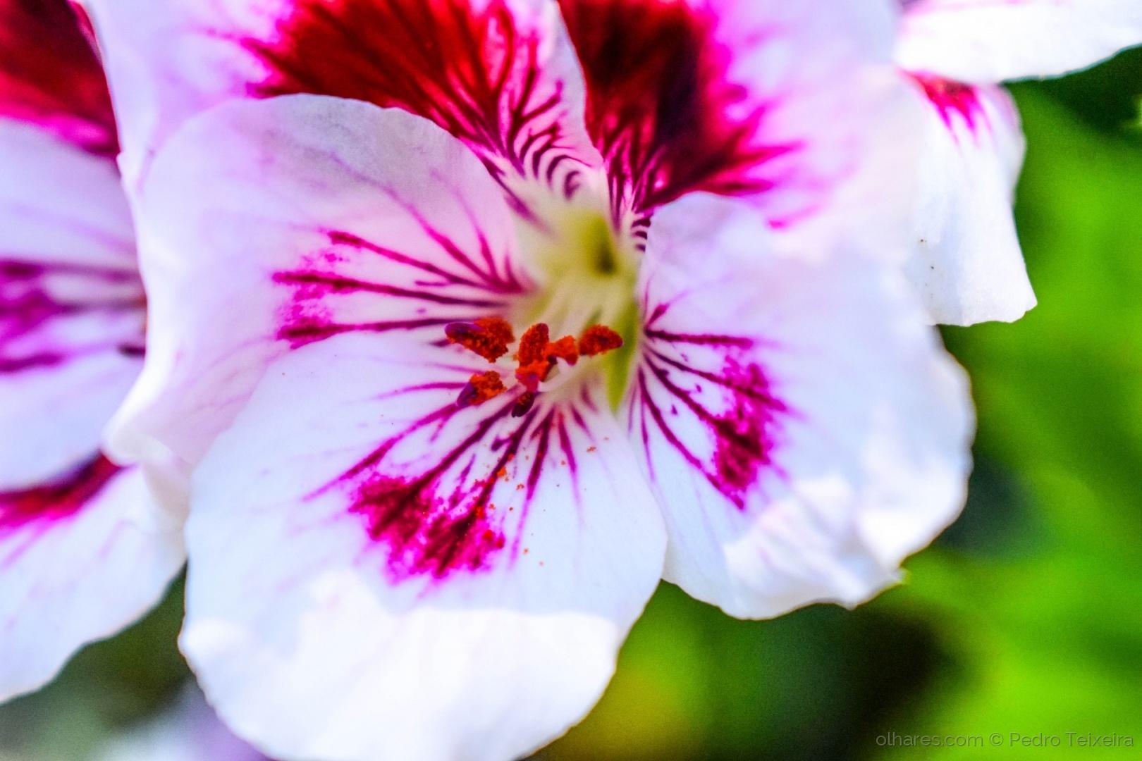 Macro/florescente, é daqui que vem o nome...:D