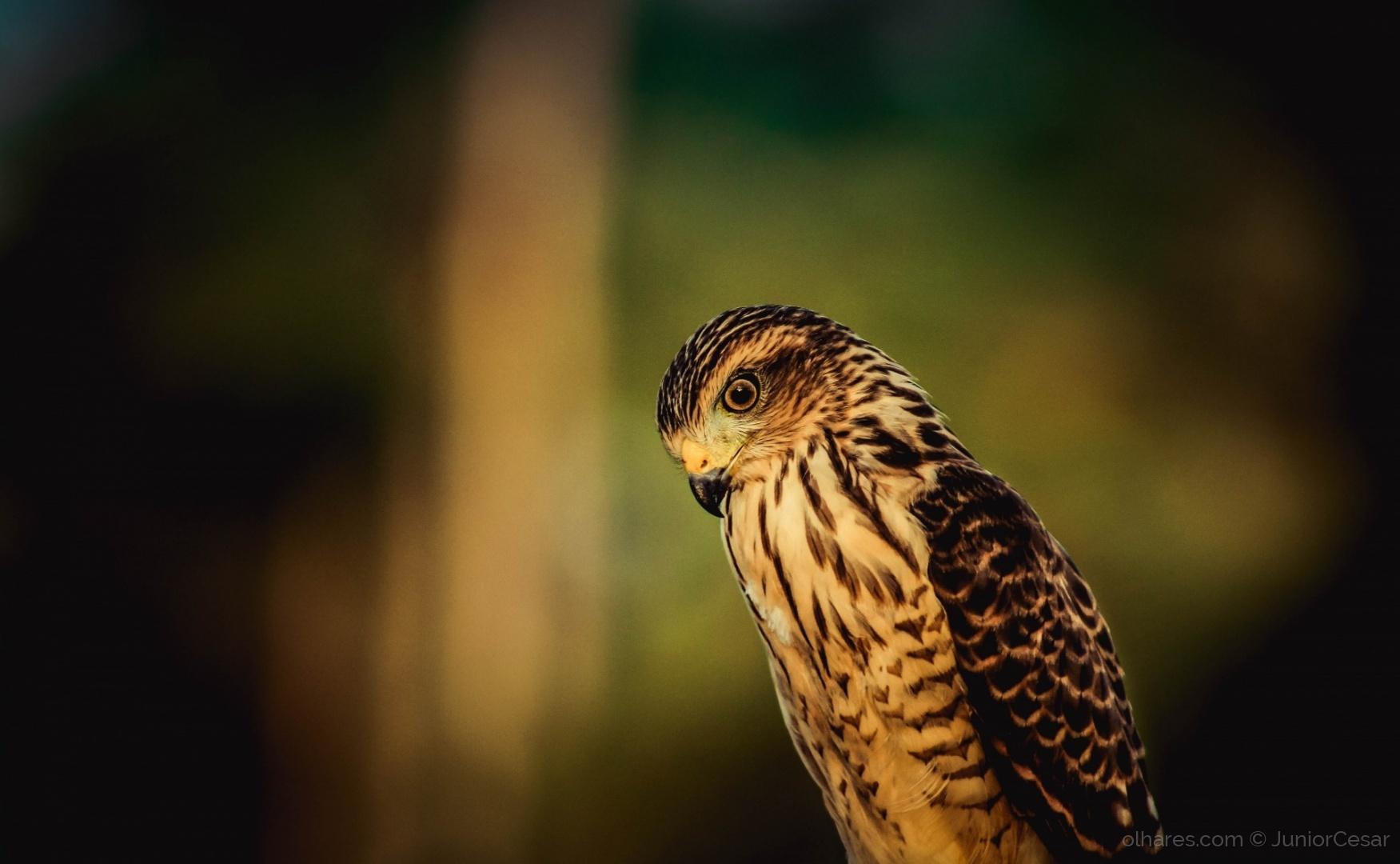 Animais/Aves do Sertão