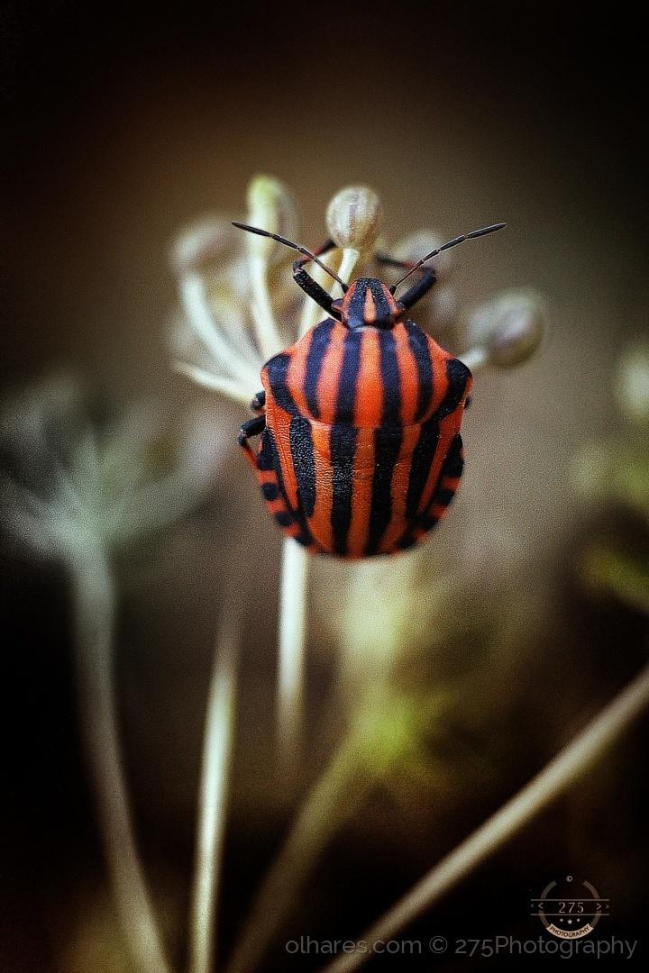 Macro/Little bug