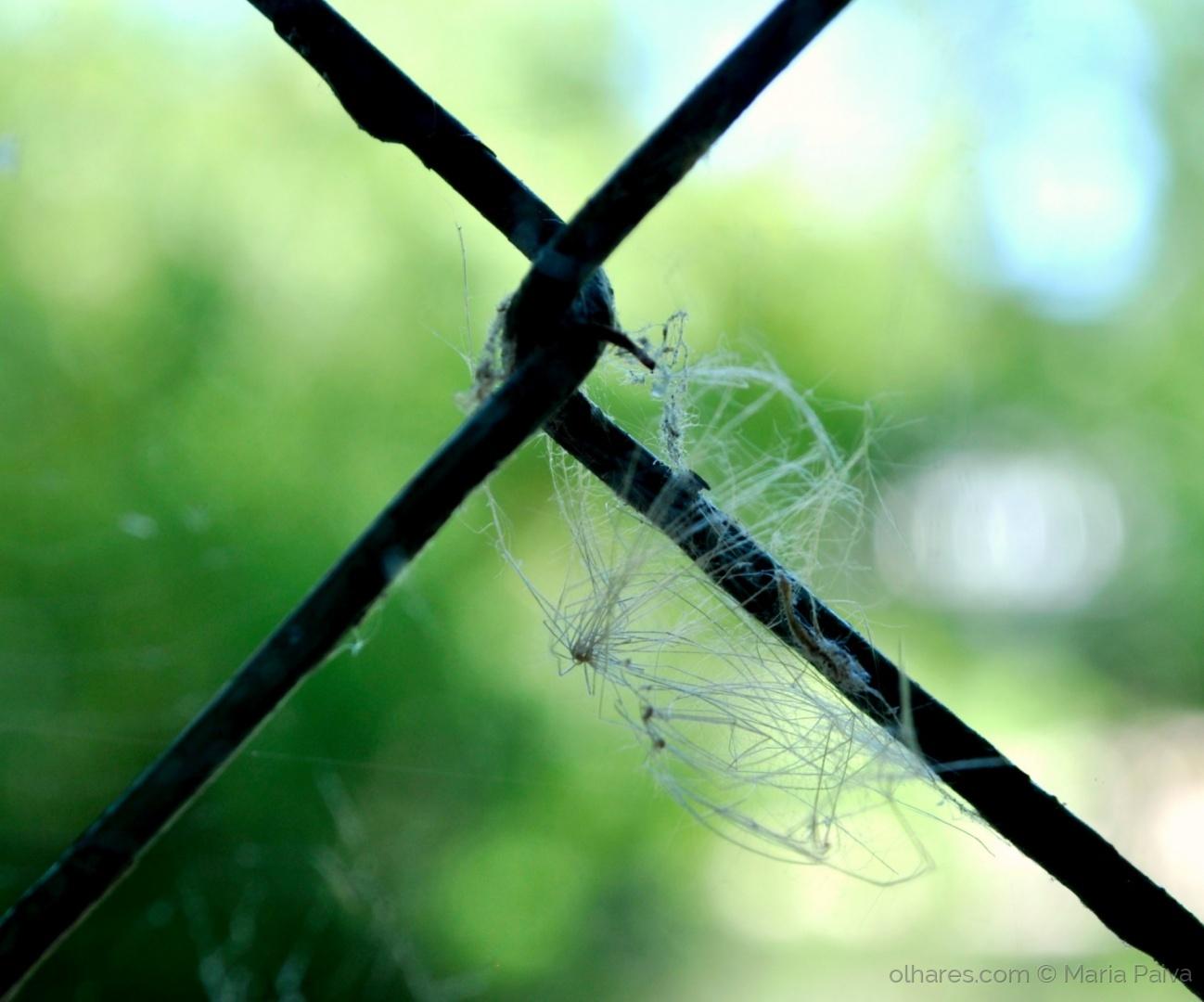 Macro/Spiderfly