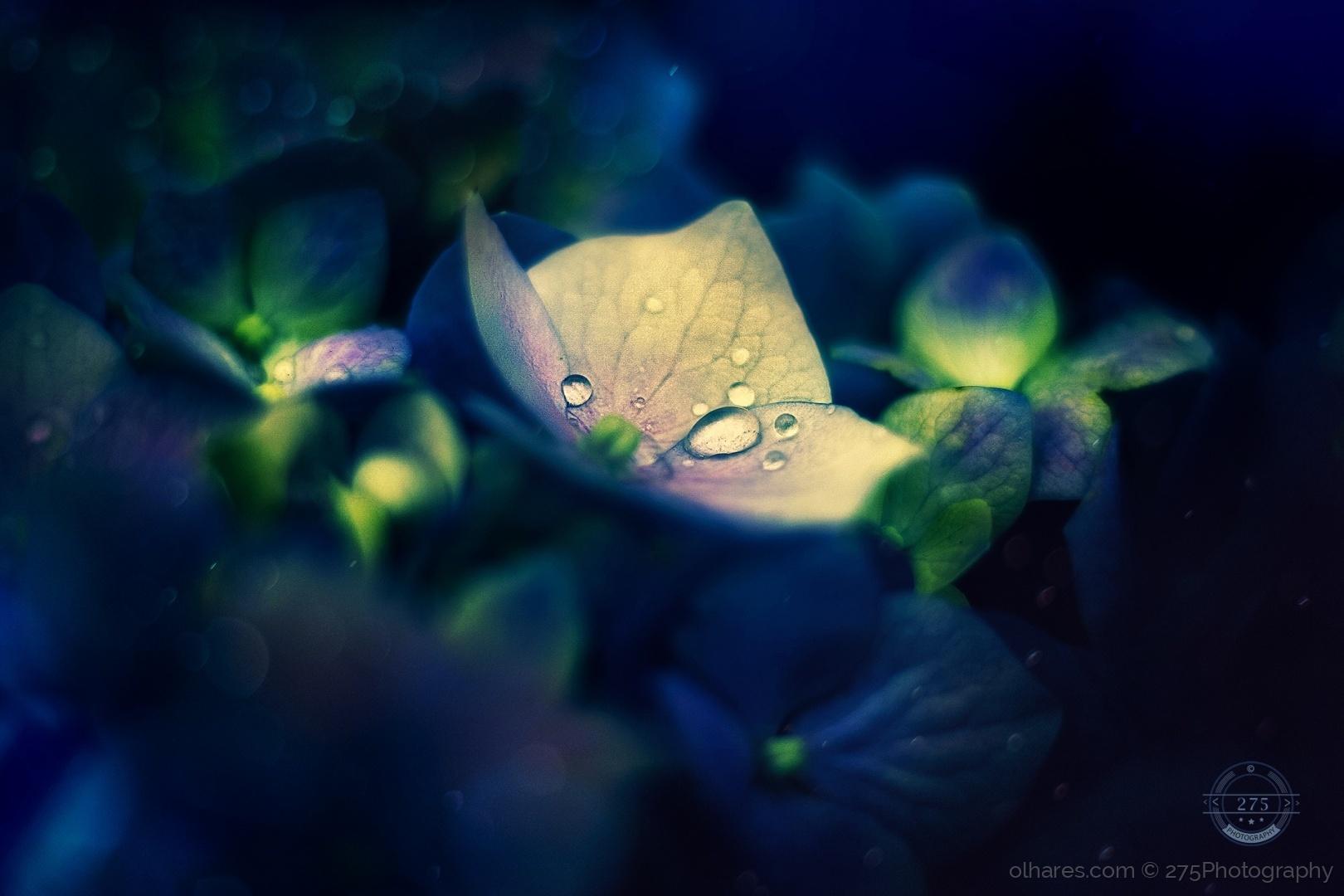 Macro/orvalho, desce leve sobre as flores