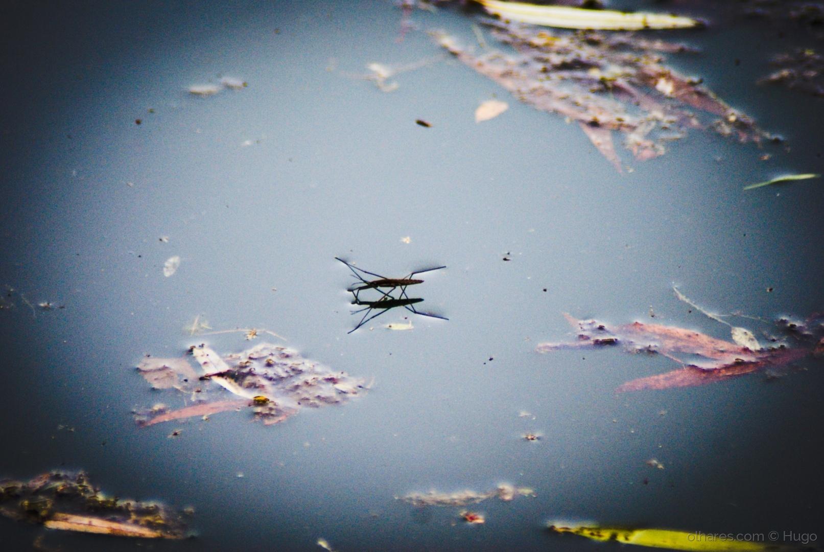 Paisagem Natural/Flutuando