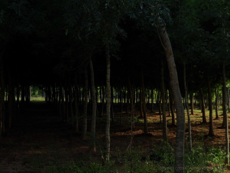 Paisagem Natural/Luz e Sombra