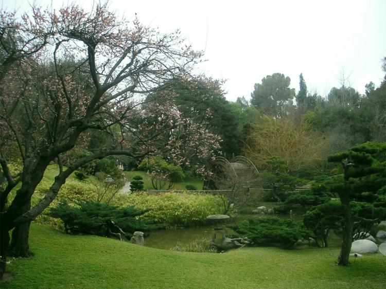 Paisagem Natural/Prunus domestica
