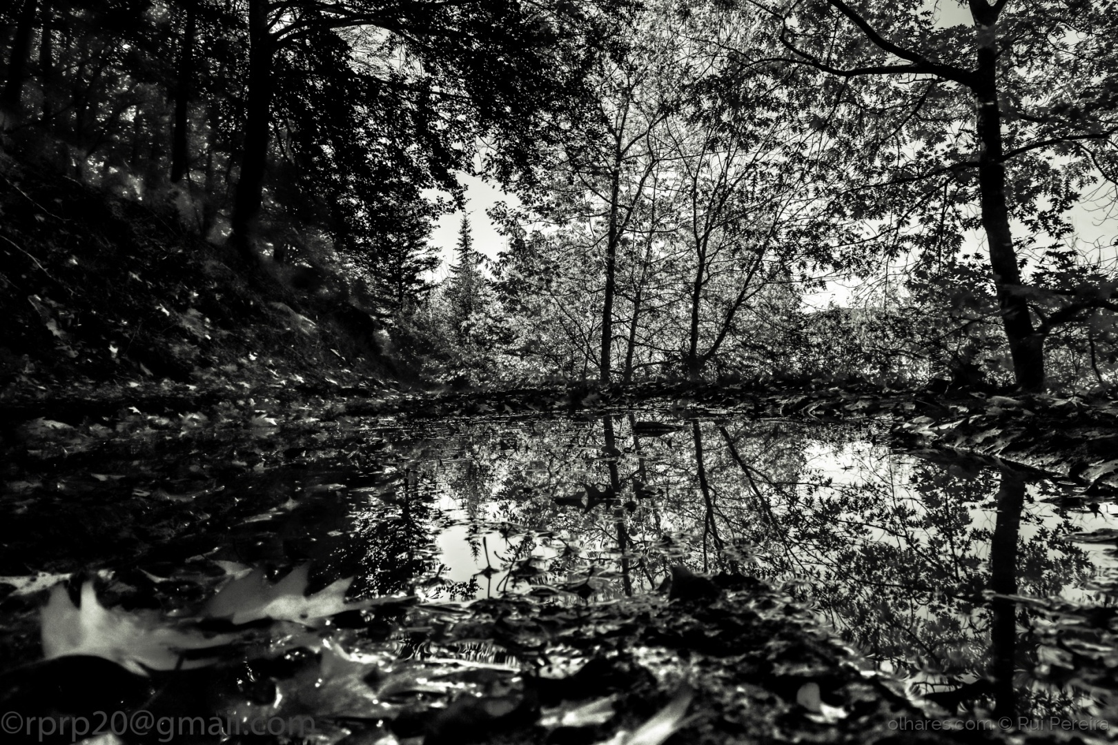 Paisagem Natural/Fall in black and white
