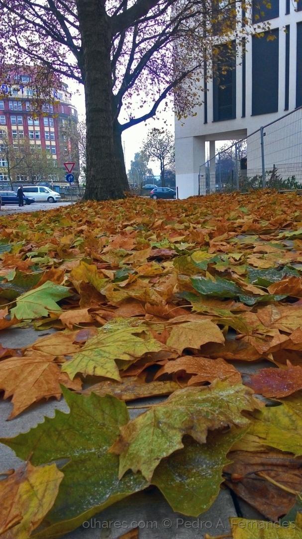 Paisagem Urbana/Outono na cidade...