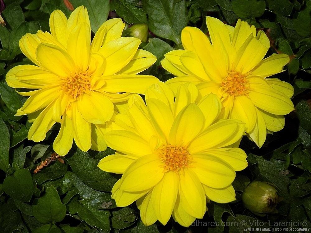 Paisagem Natural/Flores do Meu Jardim.. (Banhos de Sol.. )