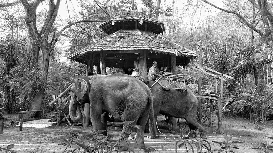 Gentes e Locais/Jungle