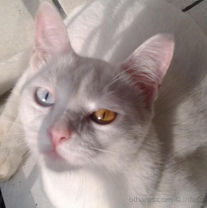 Animais/David Cat Bowie