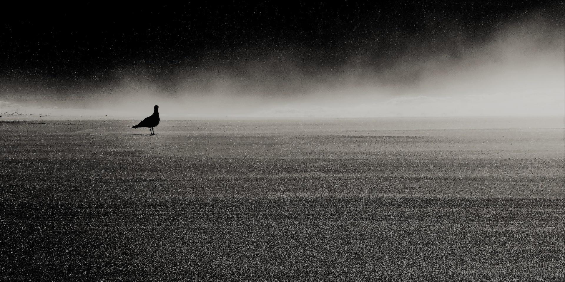 Animais/Era uma vez uma gaivota chamada LIBERDADE .