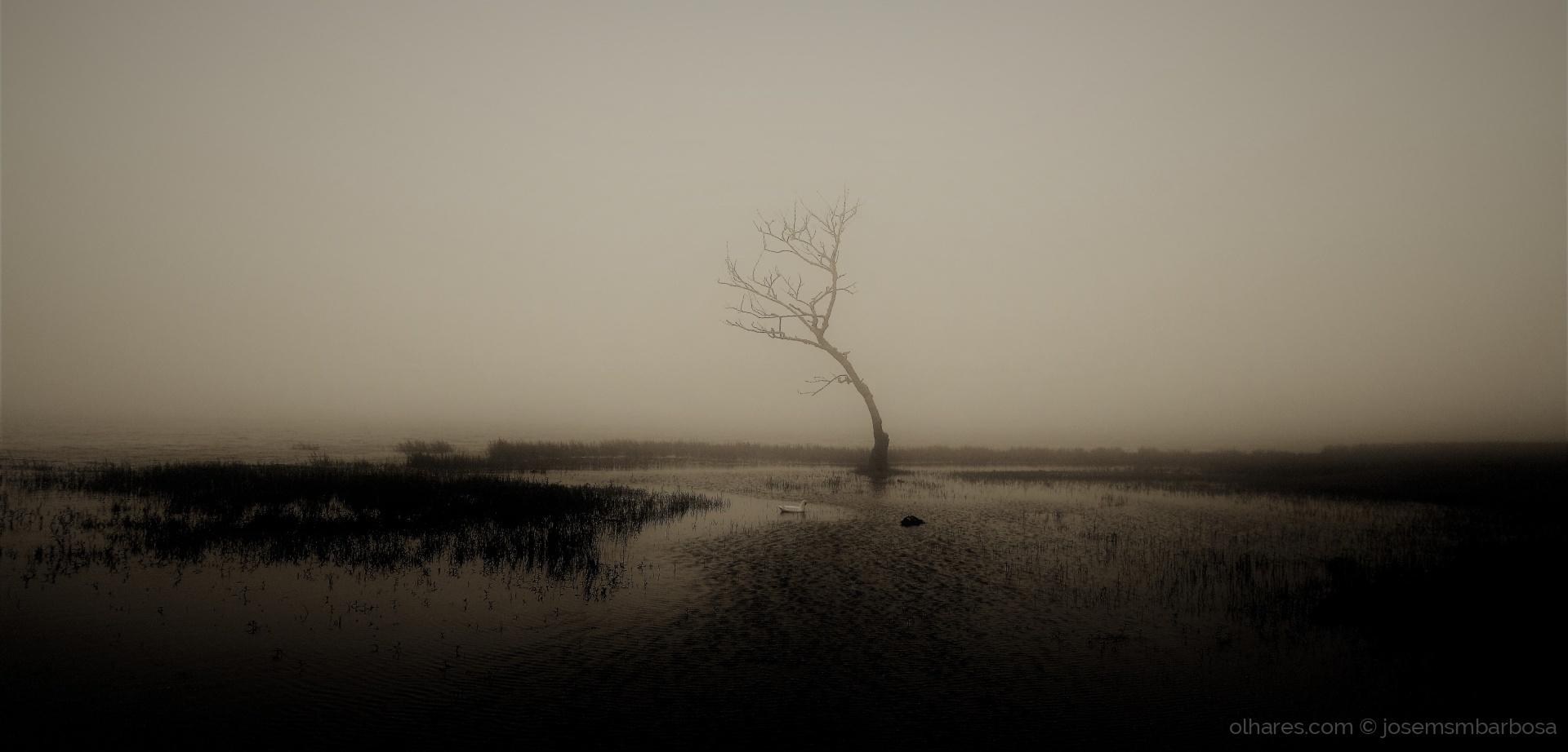 Paisagem Natural/Um poema à árvore SÓ, que me fez chorar (f. LER).