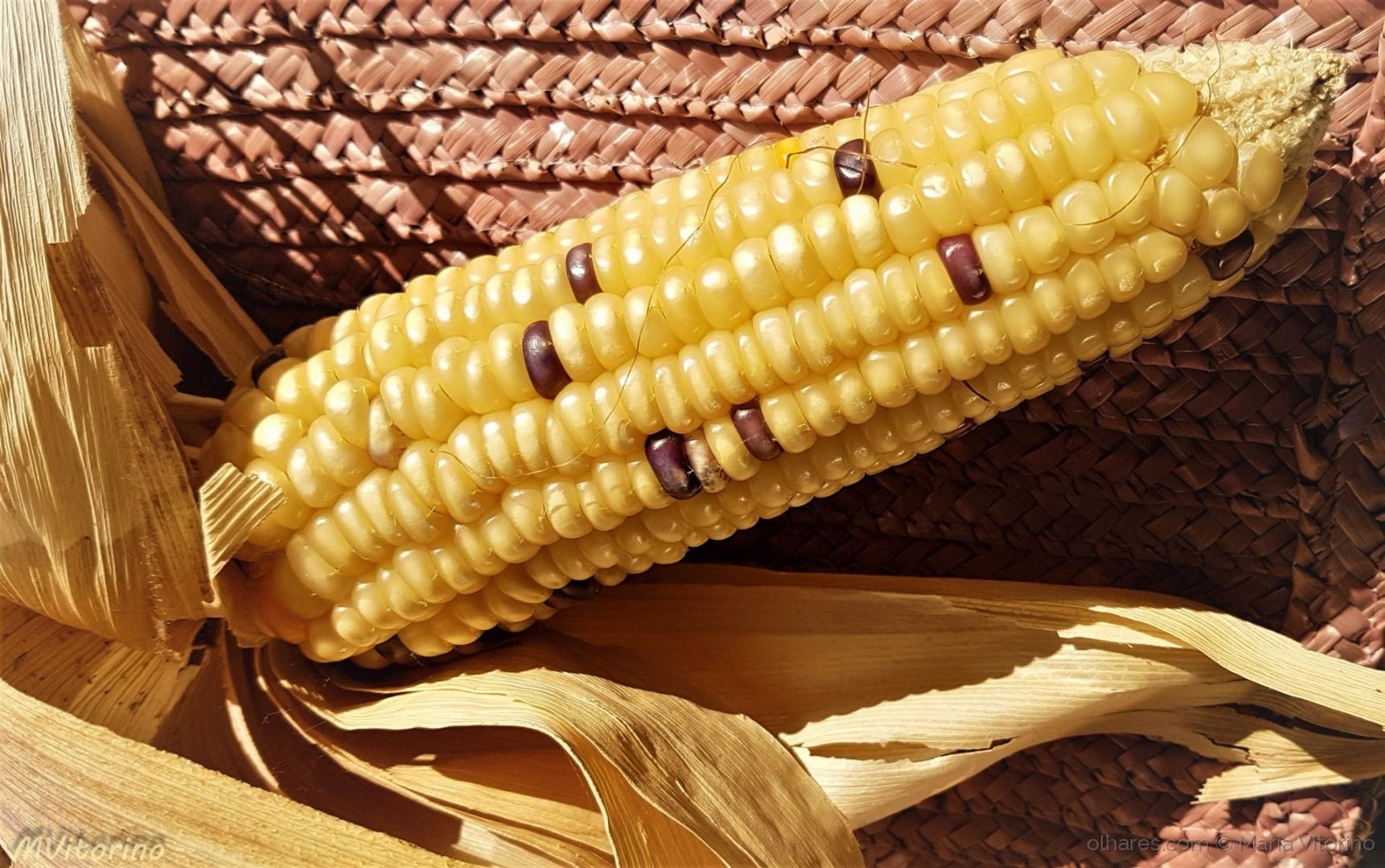 Macro/Sociedade OGM (ler sff)