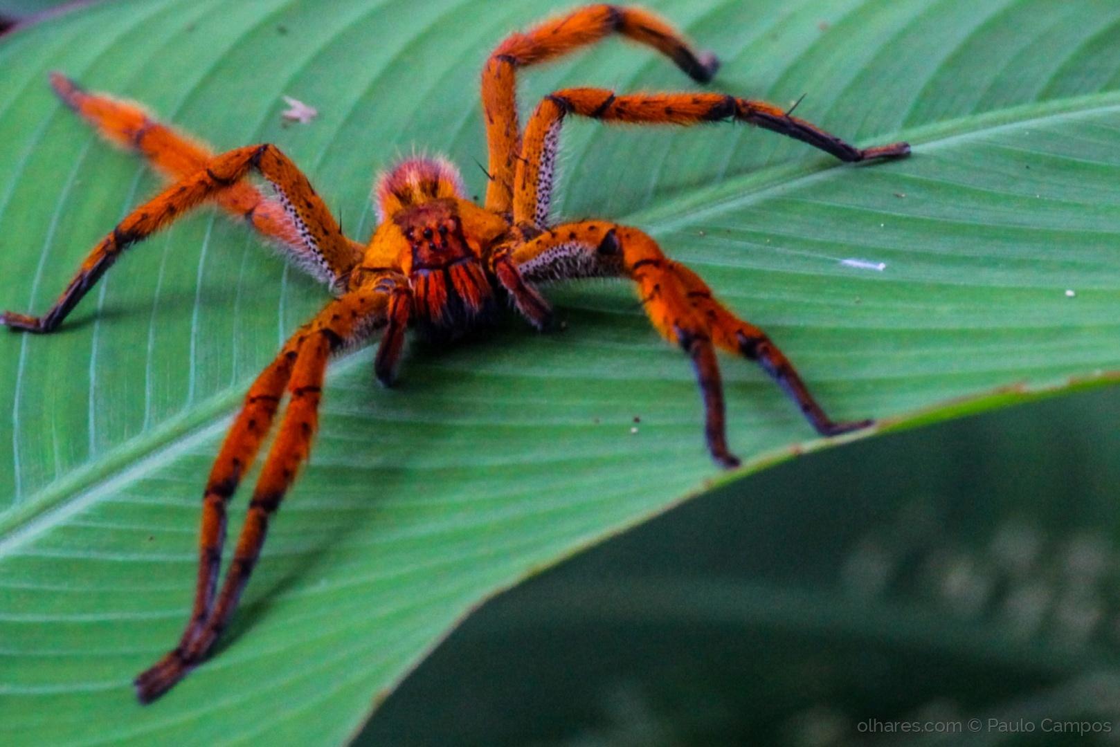 Macro/Aracnídeos (Arachnida)