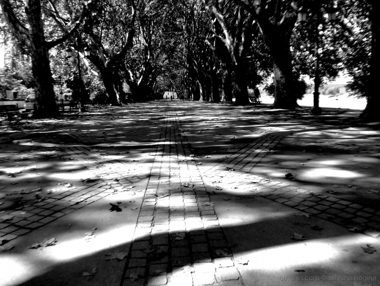 Paisagem Urbana/Avenida dos Plátanos