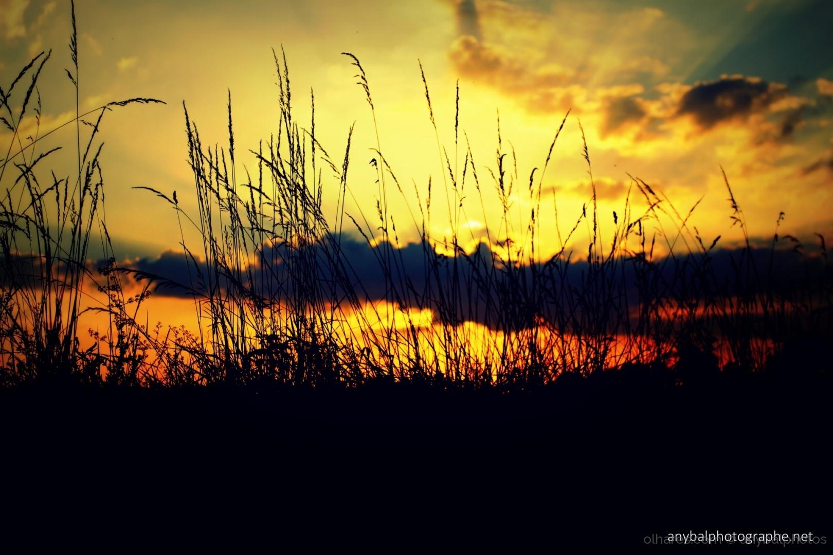 Paisagem Natural/Por do Sol