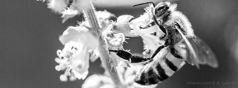 Animais/abelha em branco e preto